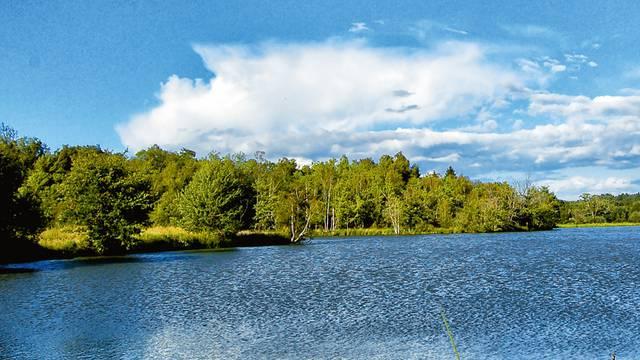 Il bacino di storioni della piscicoltura Hennequart a Saint-Viâtre. © Solenska caviar de Sologne